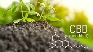 Can CBD products help in quitting smoking